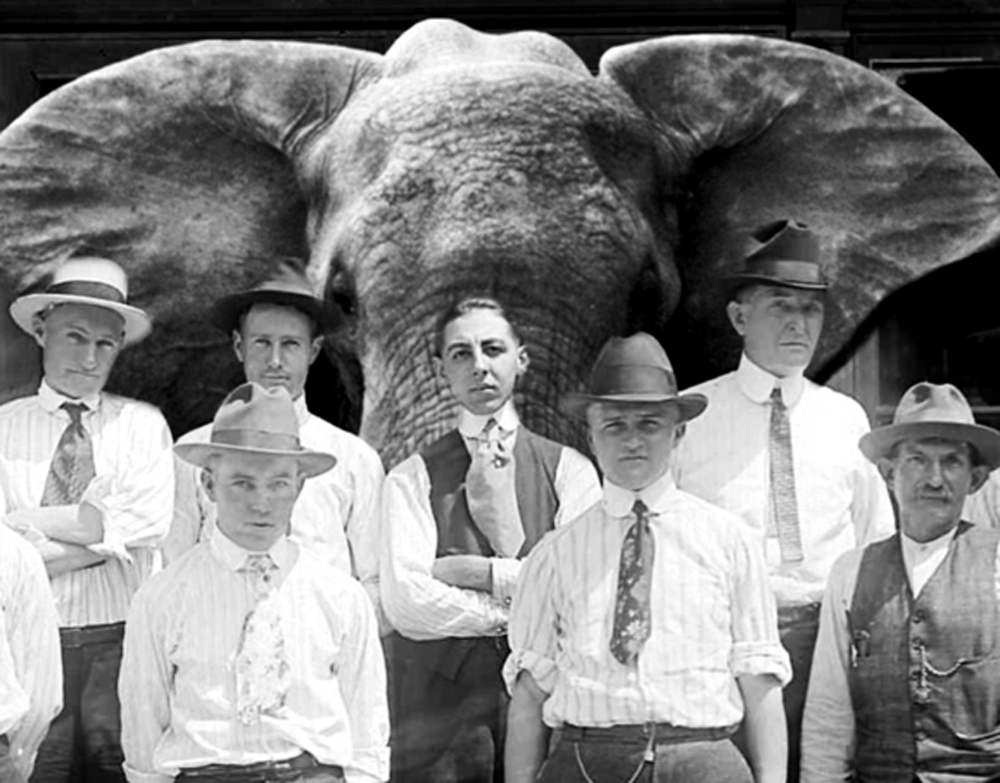 Elephant standing behind a row of men